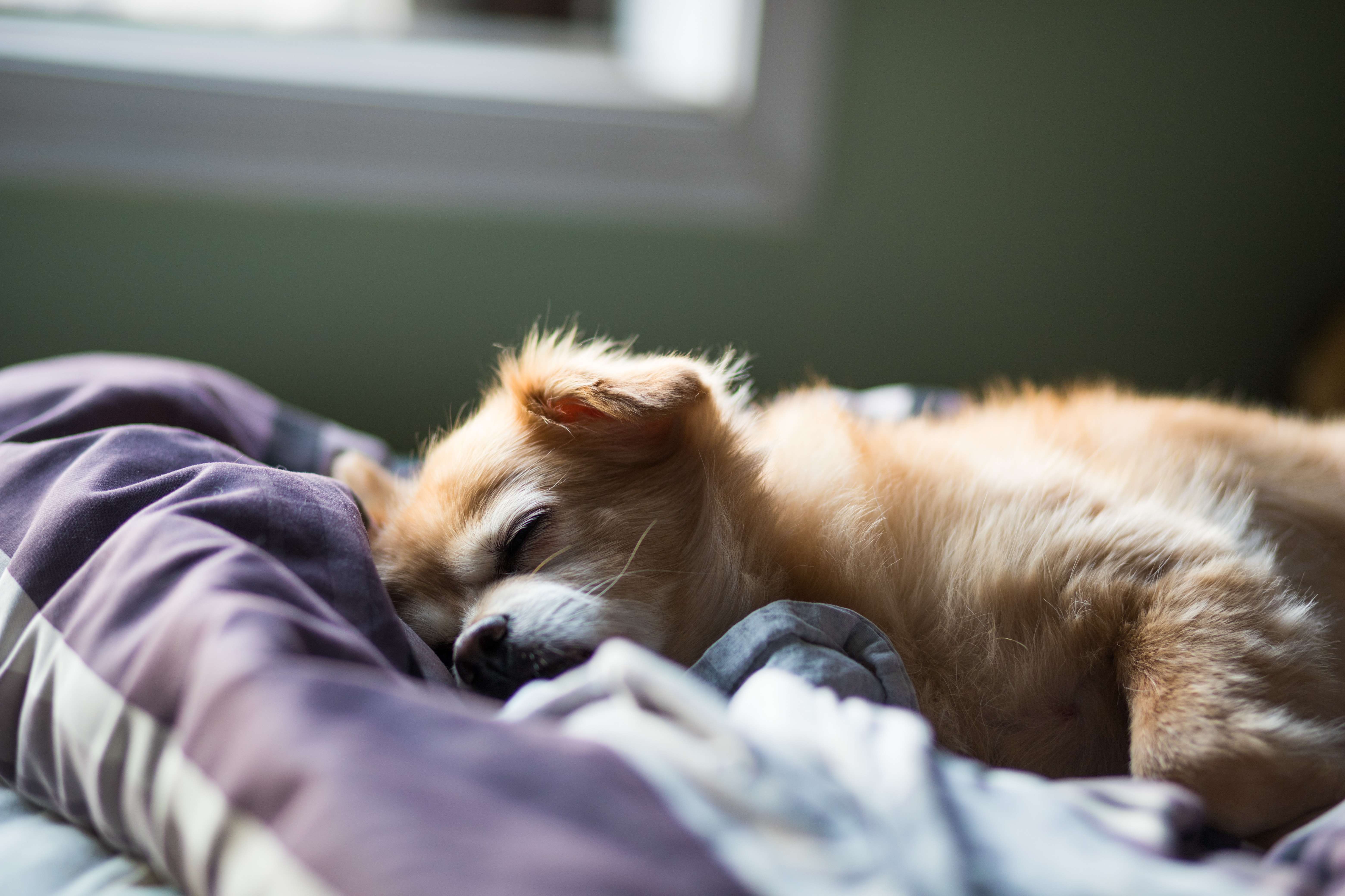 Feeling Anxious? 8 Tips to Better Sleep that can Lower Anxiety