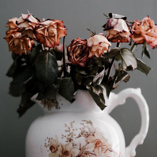 dead roses in a vase