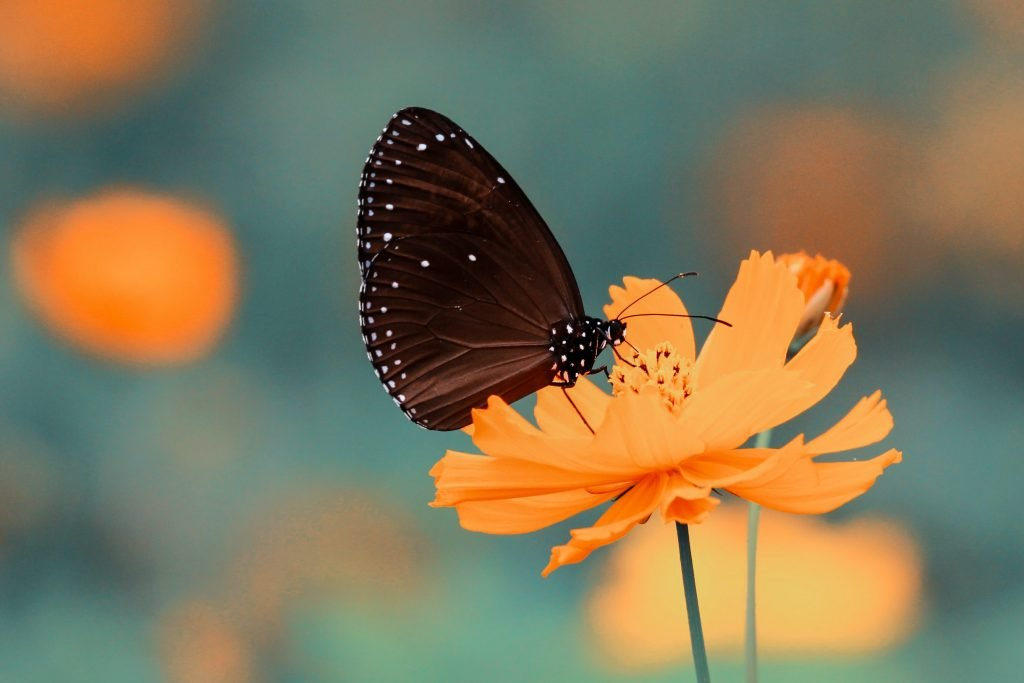 butterfly on flower affirmations